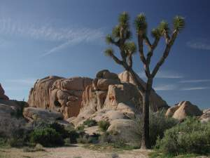 Rocks in Joshua Tree Nat. Park